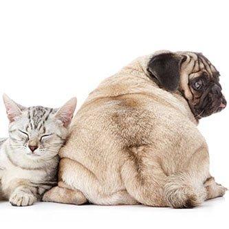Tiertherapeut